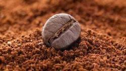 scrub_caffè